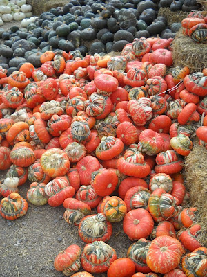 Fall Beautiful Fall Rocky Mountain Pumpkin Ranch The