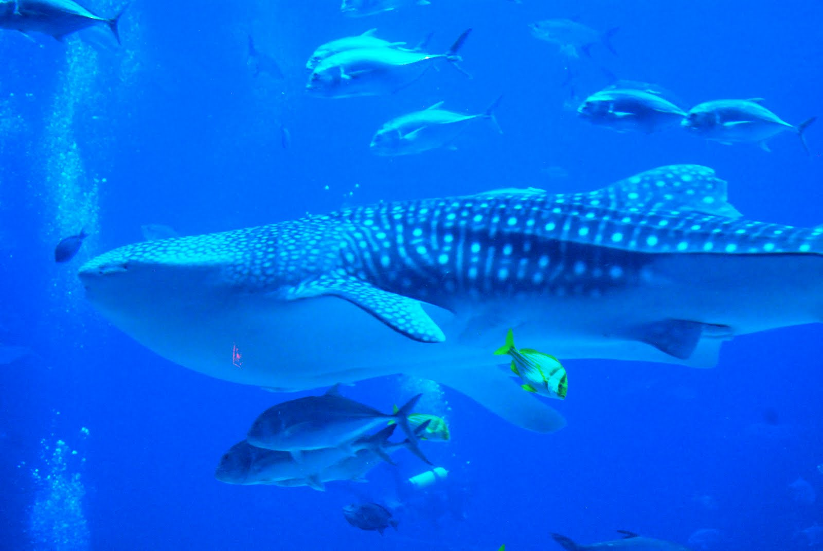 aquatic animal Types of aquatic animals include marine mammals such as whales, dolphins, sea lions, seals, manatees and walruses other types are fish, including bony fish such as groupers and.