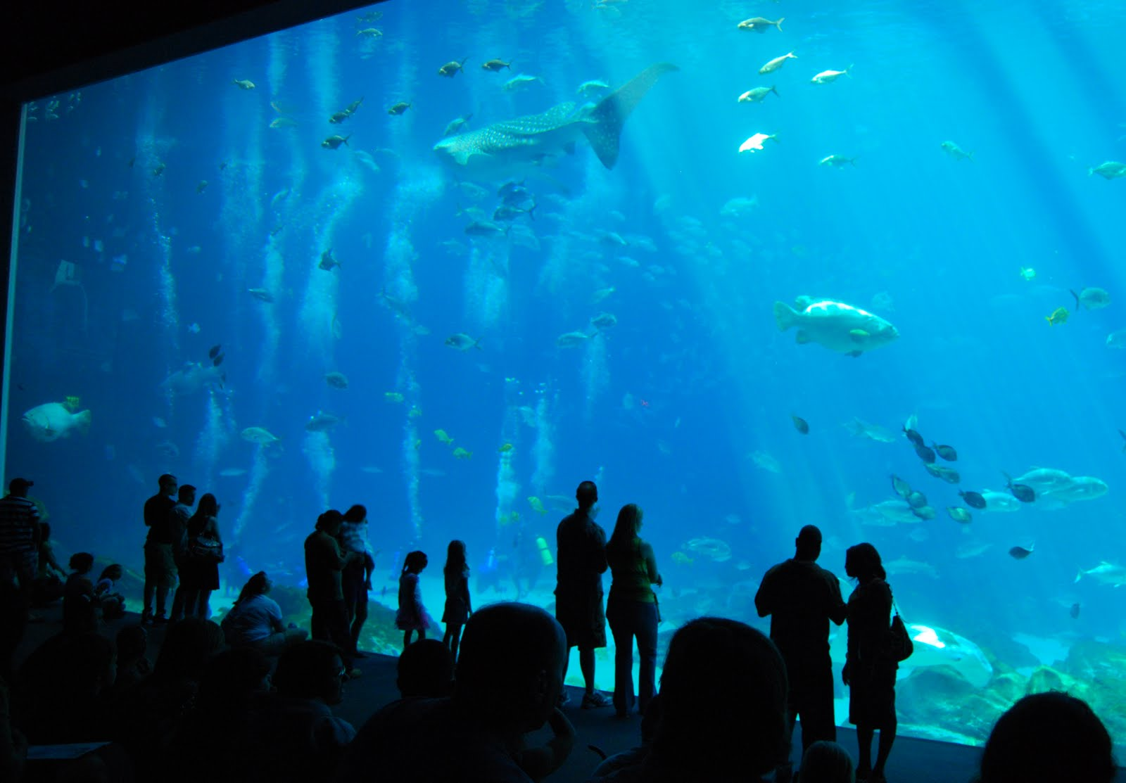 The asheville foodie georgia aquarium atlanta georgia Aquarium in georgia