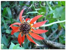 Flor da mata atlântica.