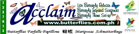 Acclaim Butterflies