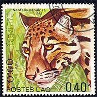 Serie gatos salvajes de Laos: neofelis nebulosa (349)