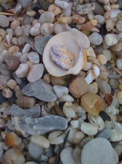 Earth Day 2009: The Beach Edition
