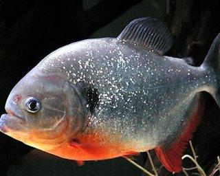 Budidaya Ikan Air Tawar