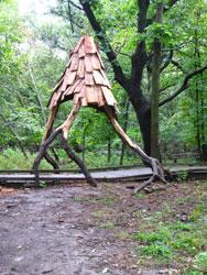 Forest Canopy - Hansen