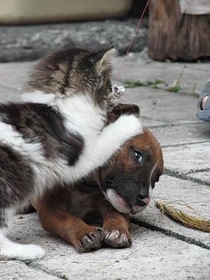 cães gatos cachorros