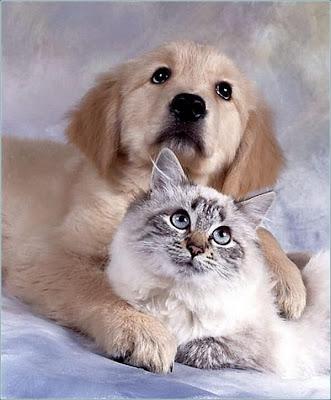 cães gatos cachorros posando foto