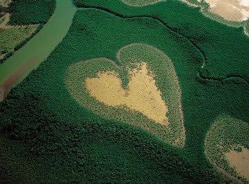 mangue coração