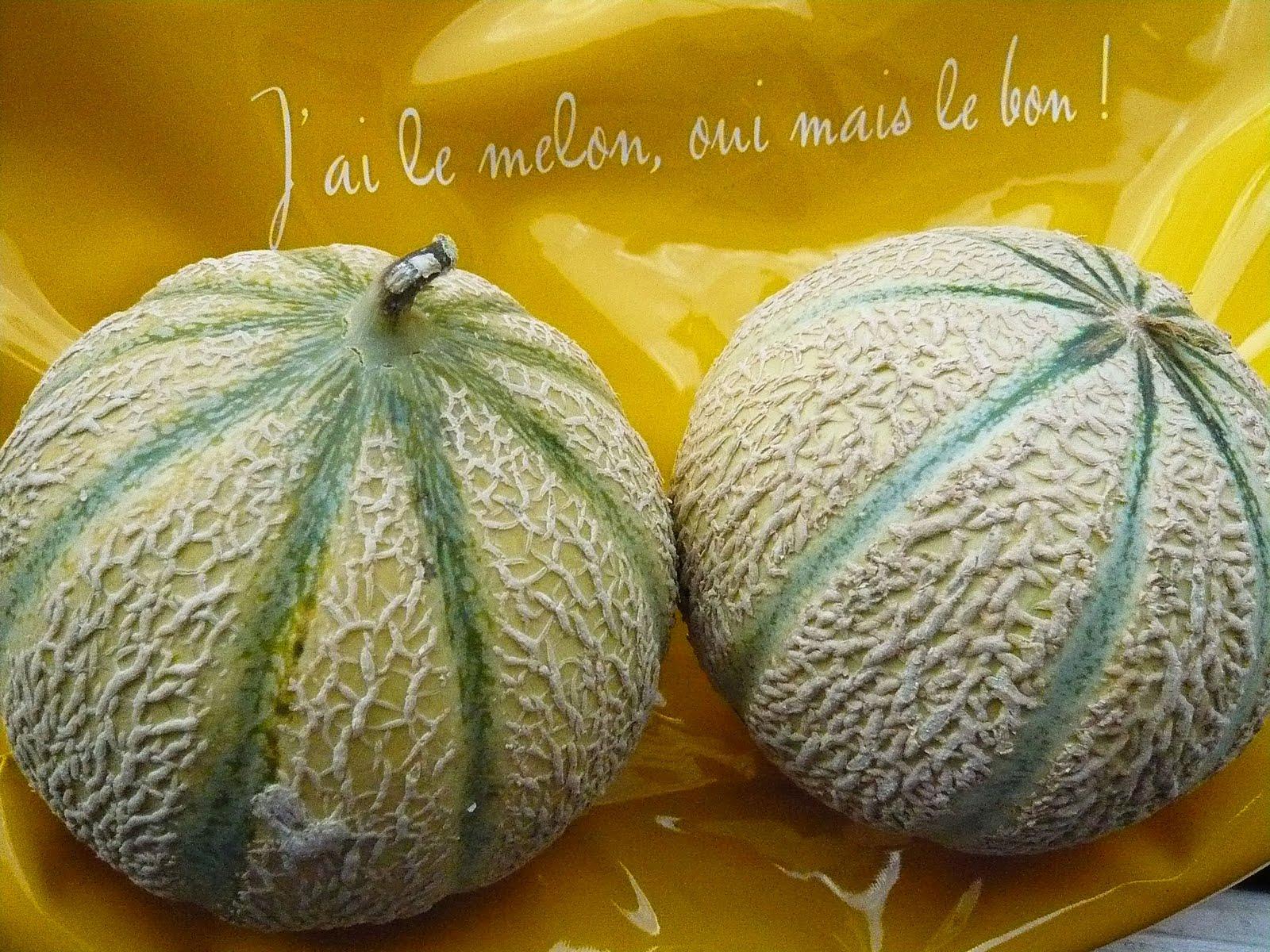 Food intelligence connaissez vous le melon charentais jaune - Culture du melon charentais ...