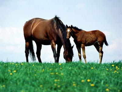horses wallpaper horse backgrounds. Horses Wallpapers 2