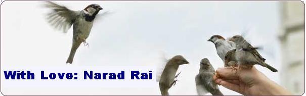 Narad Rai