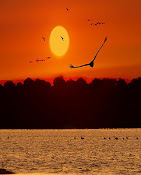 Como los pájaros