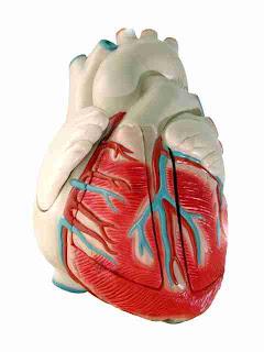 RCP Resucitación Cardio Pulmonar