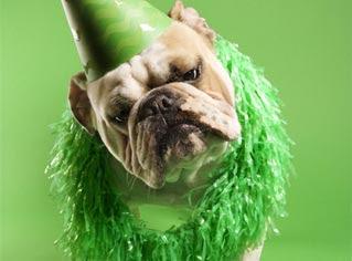 Felicidades, Perra!!! Dog-green