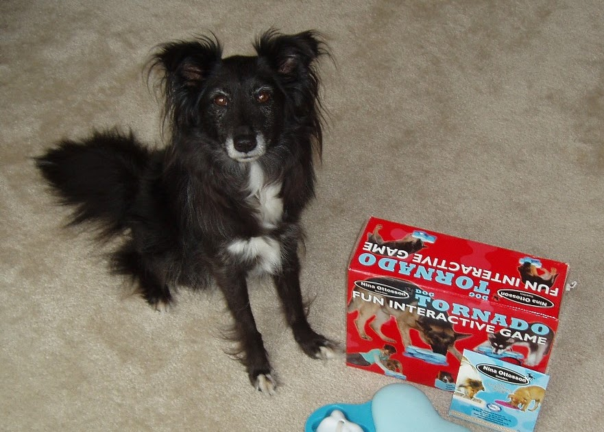 Clix Car Safe Dog Harness Review