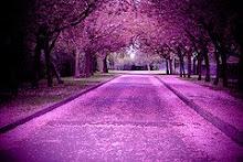 Cherry Blossom Corridor