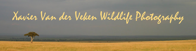 Xavier Van der Veken Wildlife Photography