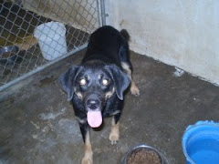 "9/7/10 ""9/5/10 Adoptable Shepherd Mix : katie URGENT Mason County Animal Shelter Pt. Pleasant WV"""