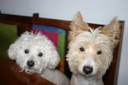 Mino e Rudi