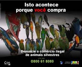 NÃO ao tráfico de animais silvestres!