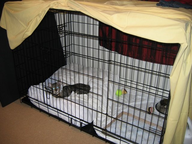 [cage+1.JPG]