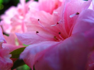 pink flower photo beth hemmila