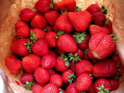 oregon strawberries photo