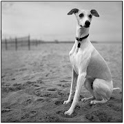 I had never heard of a whippet before until some wonderful women interested .
