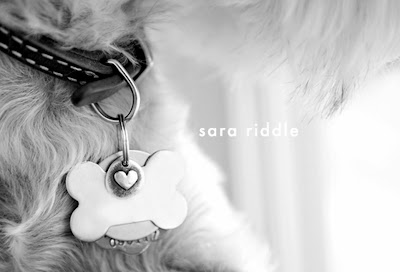silver heart charm dog collar pet jewelry