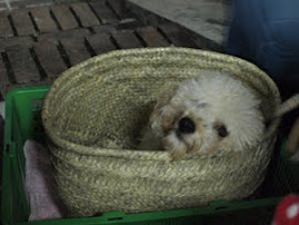 Mascot in a basket