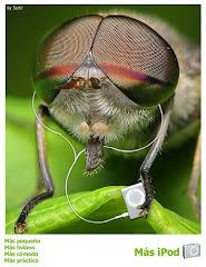 Una mosca con estilo