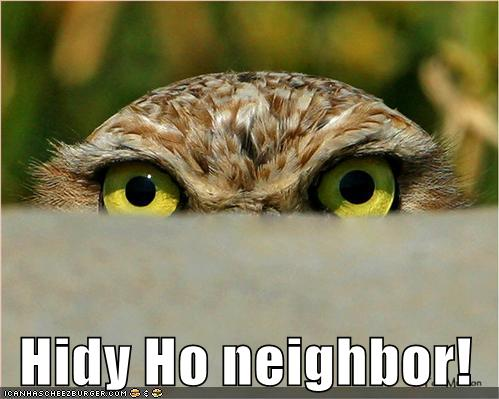 Funny Pics Of Owls. Friday, September 17, 2010