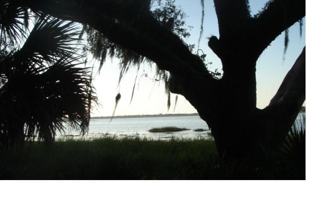 Evening at Myakka State Park