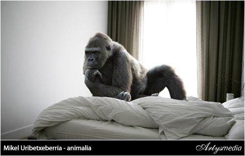 Mikel Uribetxeberria - animalia
