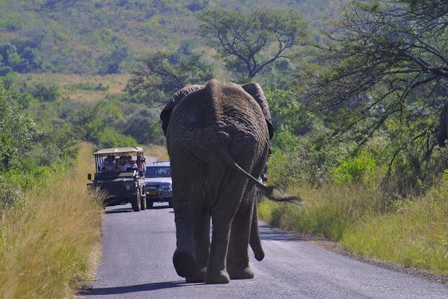 Blog de viajes viajar y aprender parques naturales de for Provincia sudafricana con durban