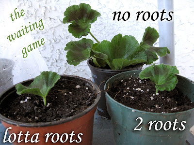 Rooting Hormone: How To Use Rootone For More Plants From Cuttings