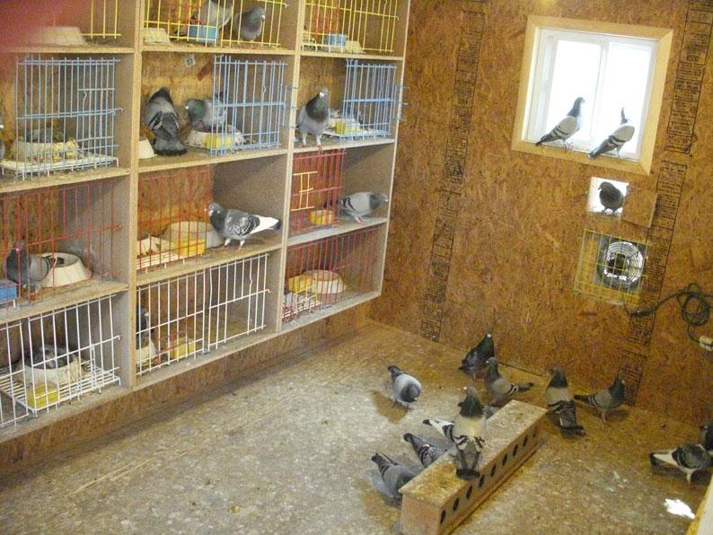 Attrezzature specifiche colombi for Specifiche home plan