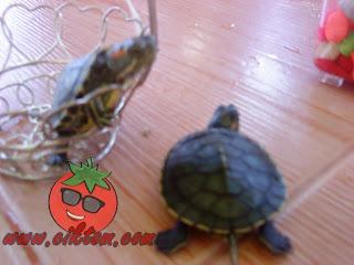 kura-kura diego dan dora 6