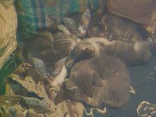 Invazie de...pisici