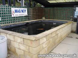 The beauty of japanese koi fish koi pond construction for Concrete koi pond construction