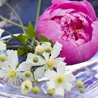 http://1.bp.blogspot.com/_0UnDBbPjp9Q/SGPmEABPUaI/AAAAAAAAAr8/qd3EY-gzXWs/s400/080626+pion+002.jpg