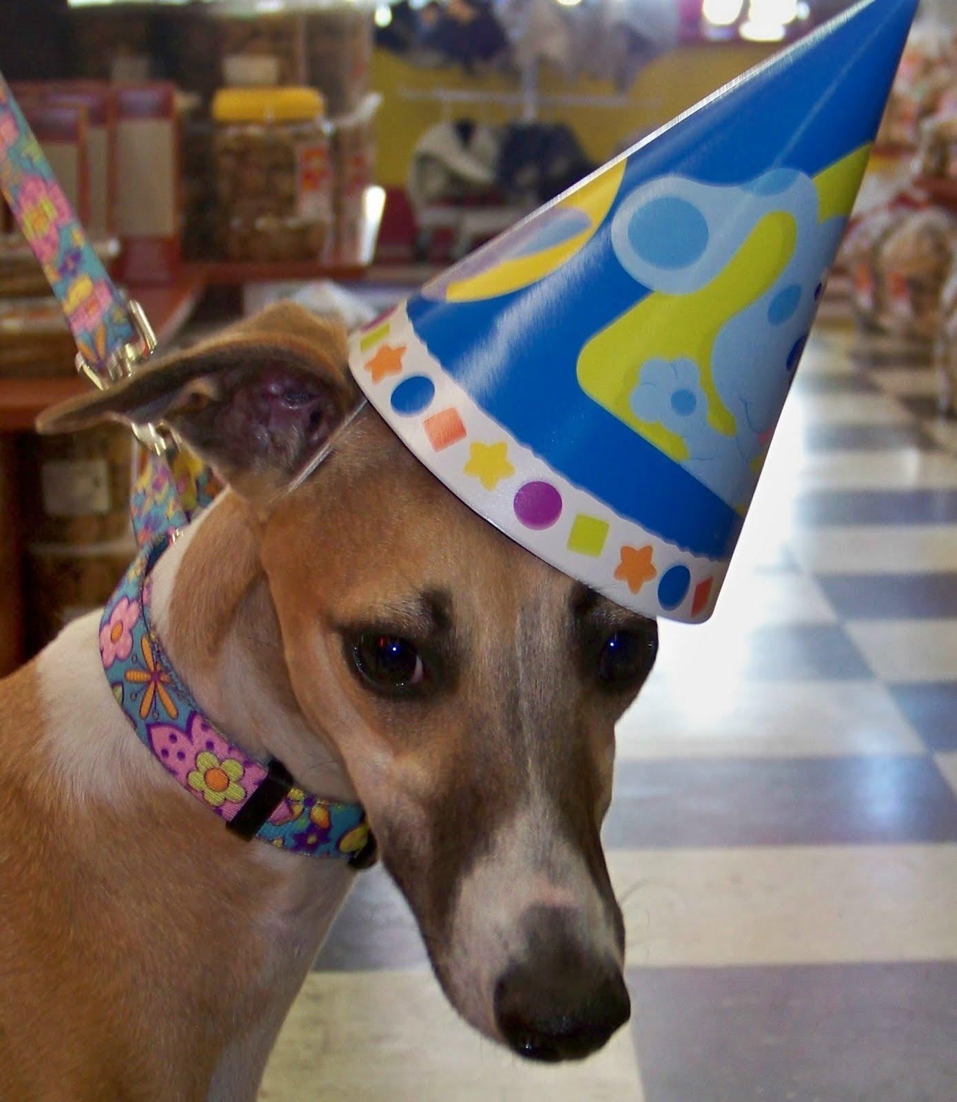 Whippet Dog Rescue Florida
