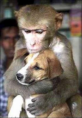 artikel yang berkategori dengan judul Gambar Monyet Lucu - Gokil