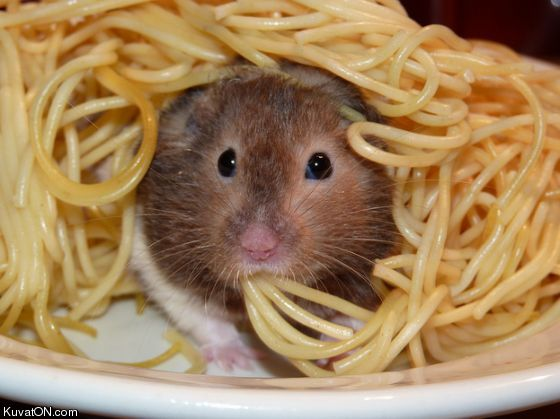 Daily Buzz Humor: What's This In My Spaghetti?
