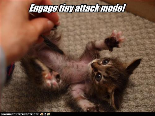 funny-pictures-tiny-kitten-attacks.jpg