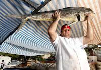sushi do arnaldo, feira, gastronomia de rua, culinária, comida, ambulante, chef