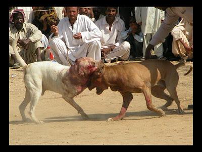 http://1.bp.blogspot.com/_0_VXeZvdRAs/TPAeZcmuGCI/AAAAAAAAAZY/xS25d2FHou0/s400/bully+kutta+in+action.jpg