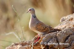 Fichas de aves de la Sierra de Baza