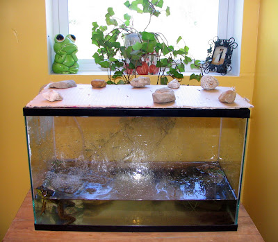 Toad Habitat Indoor http://thishandmadelife.blogspot.com/2008/08/indoor-pond.html