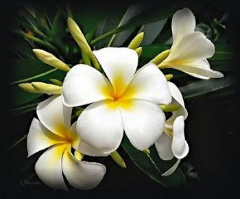 Siempre vas a ser la flor mas dulce de mi jardin ♫